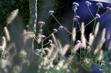 sfeervolle grassen