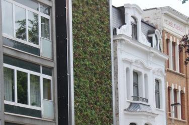 Groene gevel - Outlook Groenprojecten