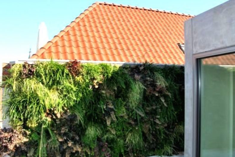 Groene gevel / groene wand - Outlook Groenprojecten
