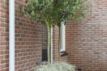 Eigentijdse leeftuin in IJsselmuiden - Outlook Groenprojecten