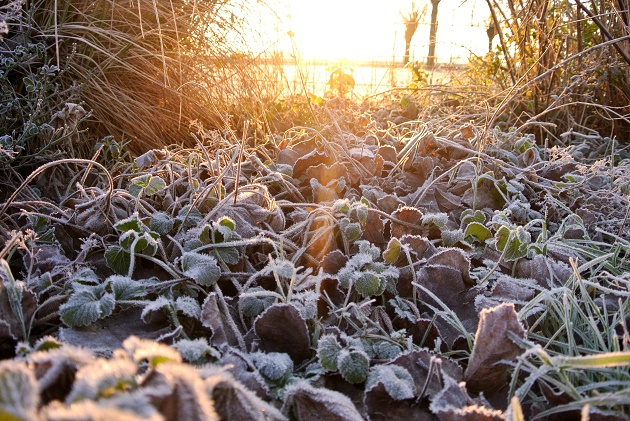 Winterklaar Maken Tuin : Uw tuin winterklaar outlook groenprojecten