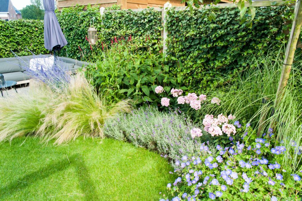 kleurrijke tuin in kampen