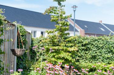 groene tuin in kampen