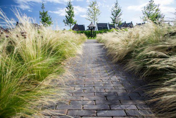moderne tuin hoge grassen