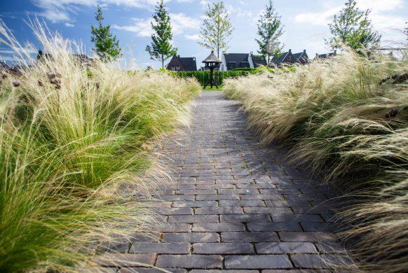 Moderne grassen